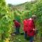 Wein Rheinhessen Erfahrungen